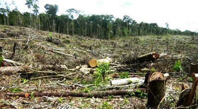 INFONA trabajará con plataforma digital internacional para monitoreo de bosques