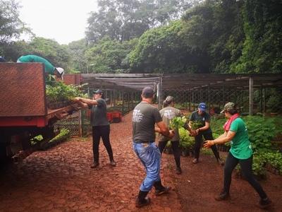 Vivero de Itaipú produjo más de 100.000 plantines en febrero