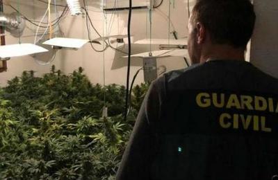 Familia convirtió su casa en un invernadero de marihuana: tenían más de 100 plantas