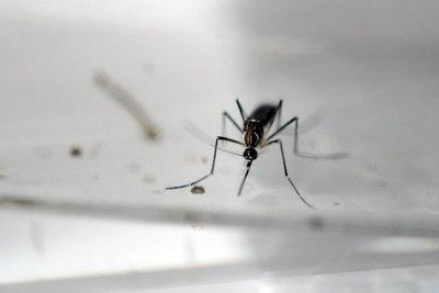 Científico francés visita el país por una investigación sobre mosquitos