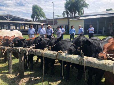 Guatemala quiere importar genética bovina de Paraguay