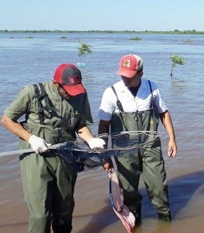 Lanzaron alerta por ¿peces envenenados?