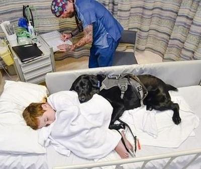 Mahe, el perro que cuida a su dueño autista hasta en la cama del hospital