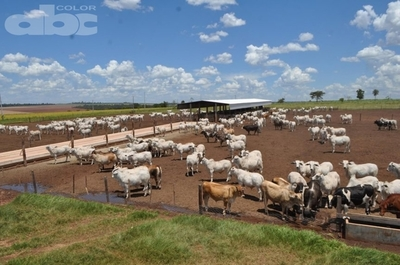 Situación actual y perspectivas del sector agropecuario