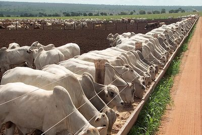 Las lluvias y el incendio de Firgochorti pueden impactar en el mercado del ganado gordo