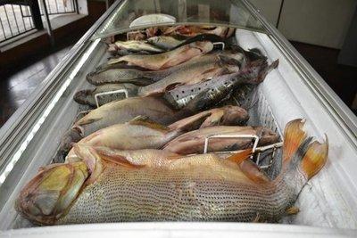 Escasa venta de pescado preocupa a comerciantes