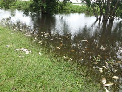 Según estudios, la falta de oxígeno por contaminación causó la muerte de peces