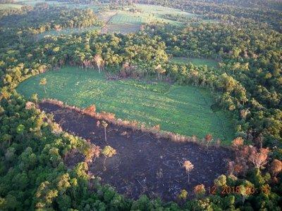 San Rafael: ONG pide auxilio ante impune deforestación