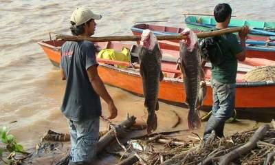 Confirman que peces son aptos para el consumo