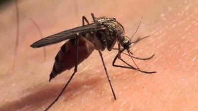 Aumentó las notificaciones por dengue