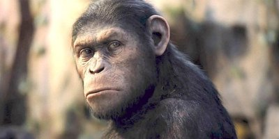 Experimento polémico: crearon monos bochos