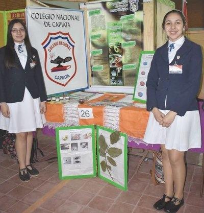 Semilla de aguacate paraguayo a México
