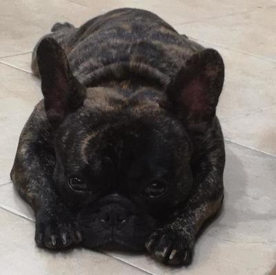 Salud recomienda no descuidar a las mascotas en Semana Santa