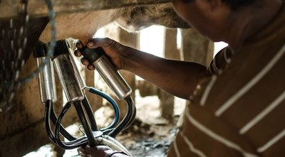 El Departamento de Caaguazú lidera producción en el sector lácteo a nivel nacional