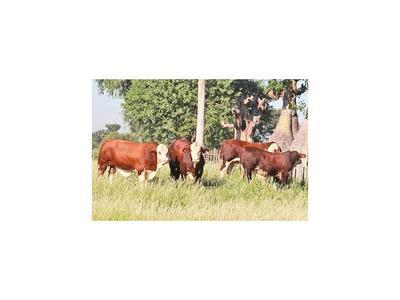 Proyectan norma que certifique genética para producir carne