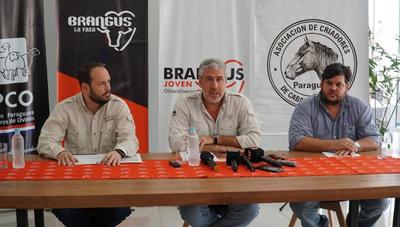 Brangus proyecta hacer negocios por G. 2.500 millones en Nacional de Otoño con ovinos y equinos