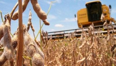 HOY / Empeora situación de la soja y sector registra 20 % de pérdida
