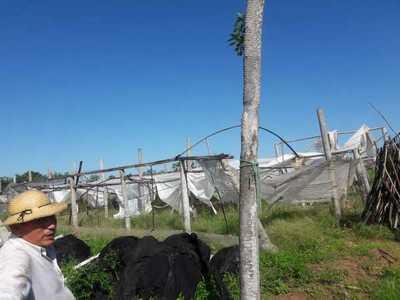Temporal daña a productores hortícolas en Concepción