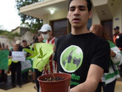 Mamá Cultiva regalará 1.000 plantines de cannabis en gran serenata