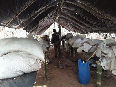 Destruyen campamento marihuanero en Pira'y