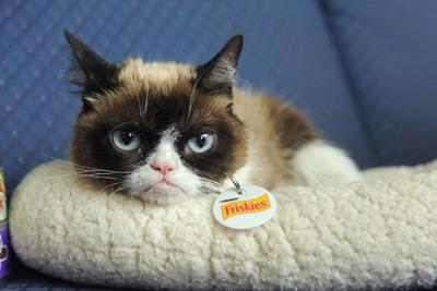 """Murió el legendario """"Grumpy Cat"""", el gato más famoso de internet"""