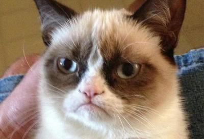 Grumpy Cat, la gata gruñona de los memes, muere a los siete años