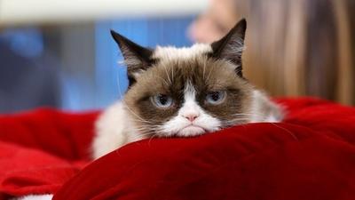 "Muere ""Grumpy Cat"", gata famosa de internet"
