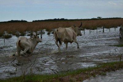 Lluvias retornarían desde hoy en varias zonas del país
