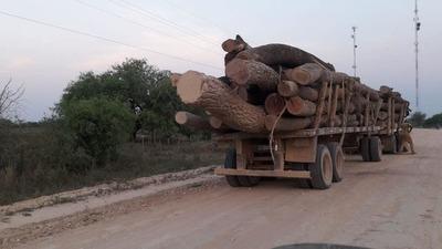 Pasará 6 años en la cárcel por tráfico de rollos de madera
