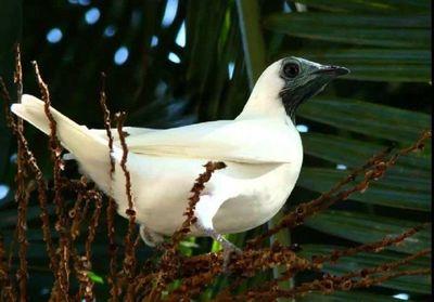 El pájaro campana, el mbói jagua, el puma y yaguareté, en peligro de extinción