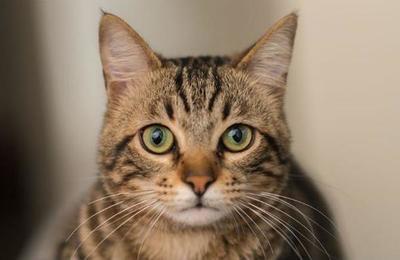 El gato fanático de las películas de acción que sorprende en la web