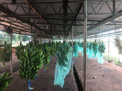Bananeros anuncian tractorazo y cierre de ruta
