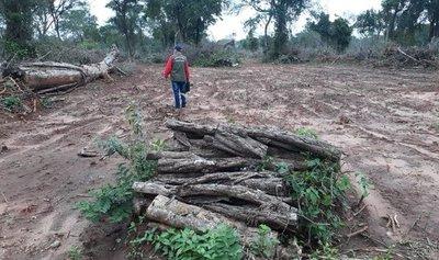 Intervienen desmonte de 15 hectáreas en Paso Horqueta