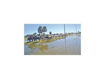 Inundación en Ñeembucú: Mortandad del ganado se hace sentir con fuerza