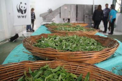 Mujeres paraguayas quieren llevar yerba mate en polvo a mercado internacional
