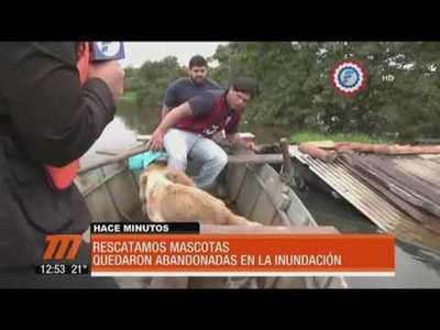 Equipo de Telefuturo rescató a dos perros del agua