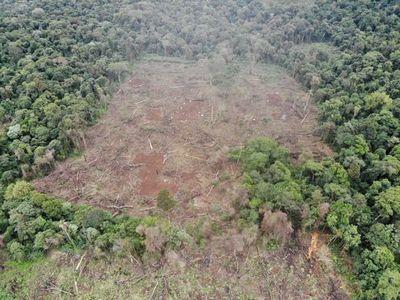 Marihuaneros deforestaron 48 hectáreas de bosques en Parque Nacional de Caazapá