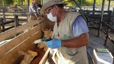 """Periodo de vacunación: """"Aproximadamente 59% de los productores estarían en condiciones de inmunizar a sus animales"""""""