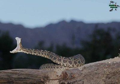 Serpientes: ¿Qué tan peligrosas son?