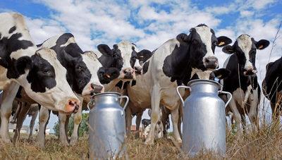 Aumentó consumo de leche en Paraguay, pero aún no alcanza estándar recomendado