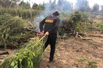 Buscan integrar fuerzas para combatir el narcotráfico
