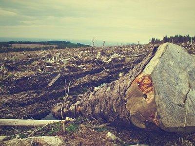 Denuncian deforestación de 4.000 hectáreas en el Chaco