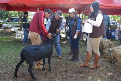 Arrancó la Expo Ovina en San Miguel