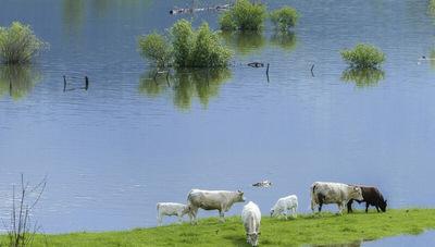 Fondo Ganadero dispone de una línea de crédito de hasta G. 150 millones (para productores afectados por inundaciones)