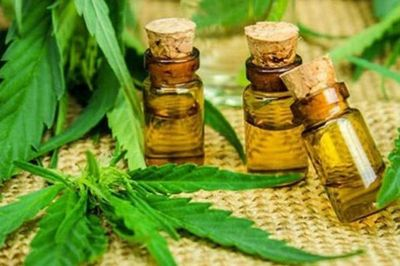 """Neurocirujano, en desacuerdo con cannabis medicinal """"casero"""""""