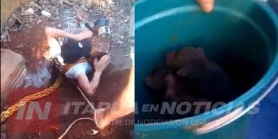 MA. AUXILIADORA: BOMBEROS RESCATAN A CACHORRITOS QUE CAYERON A UN POZO