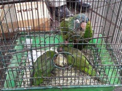 Rescatan animales silvestres del Mercado de San Lorenzo