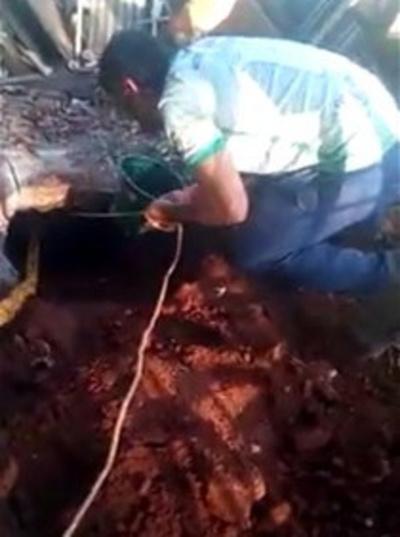 Bomberos salvaron a  dos jagua'i de un pozo