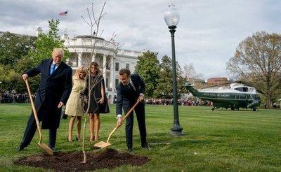 Muere el árbol que plantaron Trump y Macron como señal de amistad