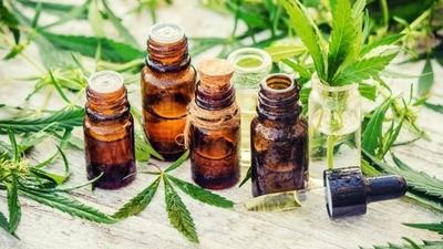 HOY / Cannabis medicinal: gobierno avanza en borrador para licencias de producción